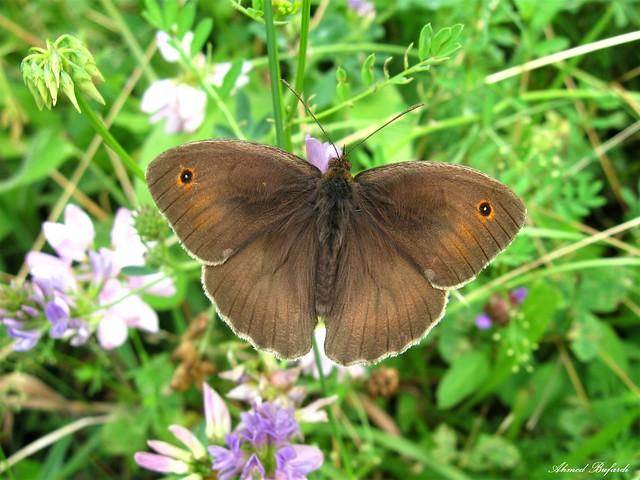 Butterfly 1608