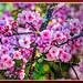 Flower_8076d