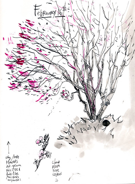 Sketchbook #112: Thundercloud Plum Tree