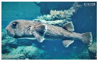 沖繩美麗海水族館-15