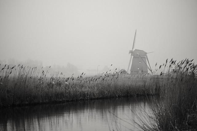 Dutch glory
