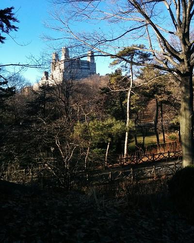 Central Park in January (3) #newyorkcity #newyork #manhattan #centralpark #winter #january #theberesford #latergram