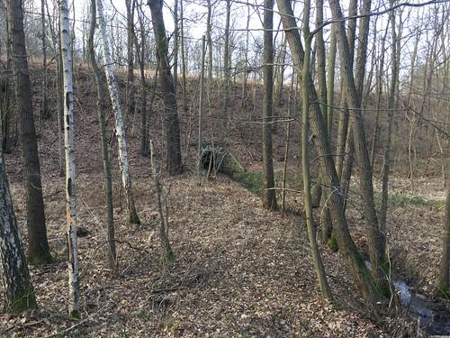 28 Strecke Borna - Großbothen (Wald bei Großbothen)