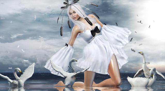 Swan..
