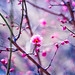 Blossoming by moaan