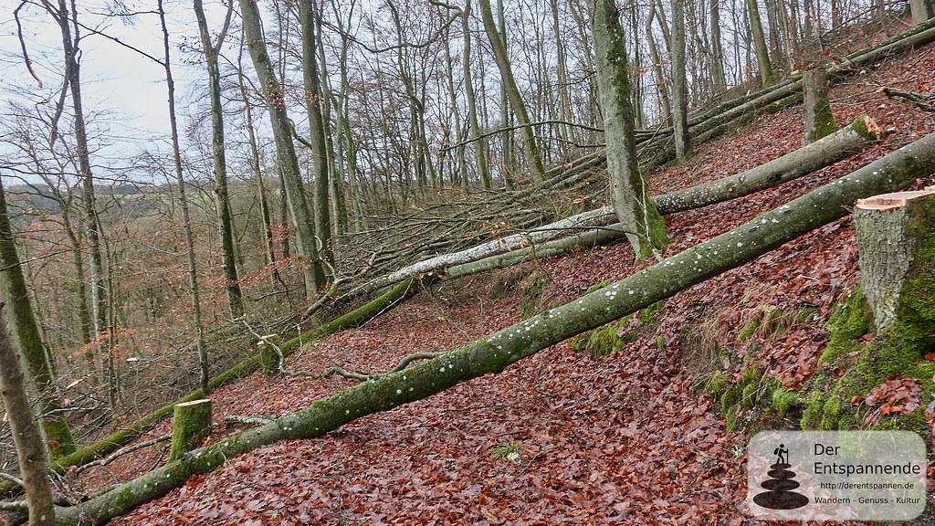 Hindernislauf im Wald bei Trautzberg