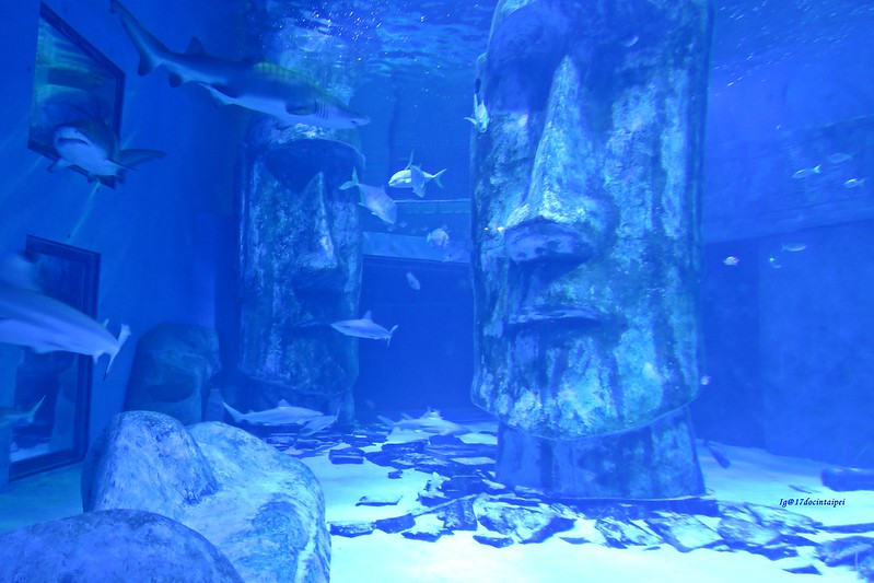 SEALIFELondon Aquarium-KLOOK客路-17docintaipei (10)
