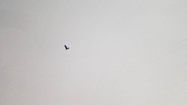 Flight. #ridingthroughwalls #xcanadabikeride #googlestreetview #ontario