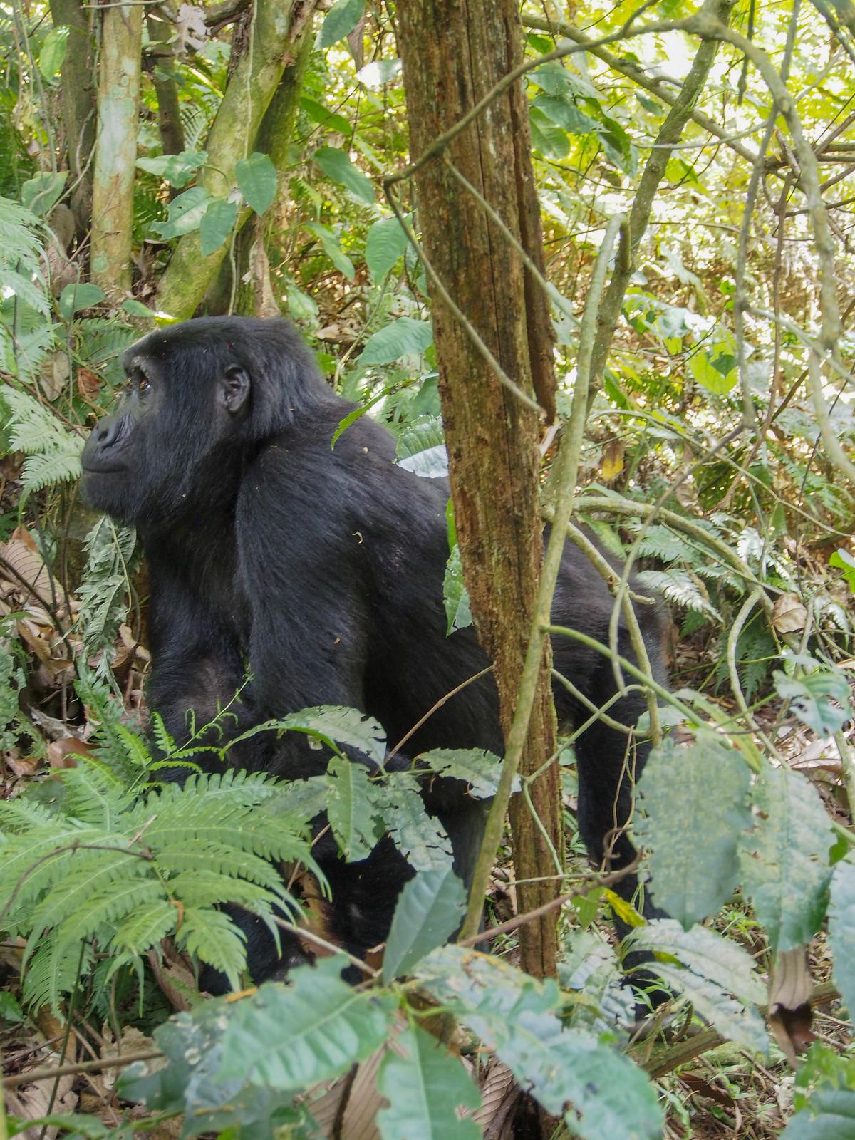 Unesco World Heritage Bwindi Uganda