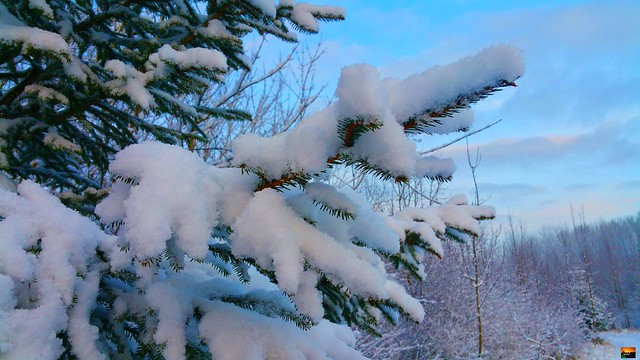 Über Nacht ist Schnee gefallen / Snow fell overnight / La neige est tombée pendant
