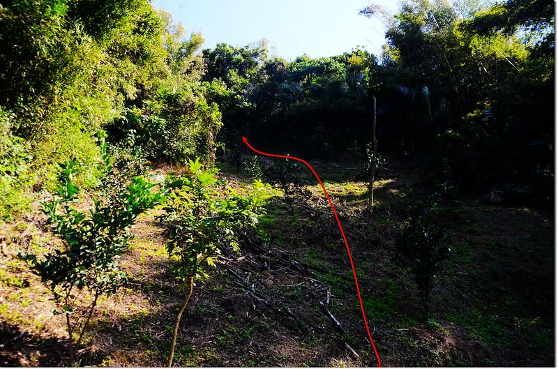 東膏蚋山果園頂端登山口
