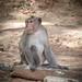 Monkeys-8