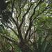 Kirstenbosch by williwieberg
