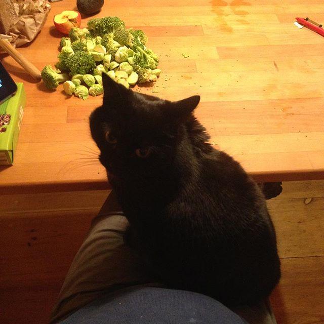 Warum kochst du so ein grünzeug?? #catsofinstagram #kadse #mastobubble #faserfriends