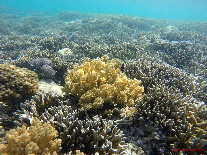 Snorkeling in Sumilon Island