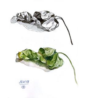 рис018