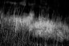 herbes - Photo of Saint-Zacharie