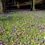 Early Spring in Ashton Park, Preston