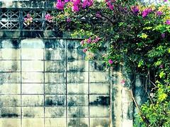 Unstoppable #bangkok #urbanhike