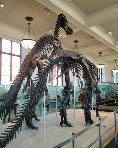 Pair #newyorkcity #newyork #manhattan #amnh #dinosaurs #fossil #americanmuseumofnaturalhistory #latergram