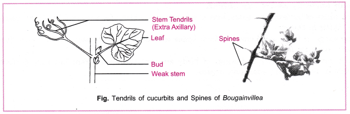 cbse-class-10-science-practical-skills-homology-and-analogy-of-plants-and-animals-3