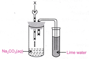 cbse-class-10-science-practical-skills-properties-of-acetic-acid-15