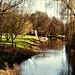 River Chelmer at Lt Waltham