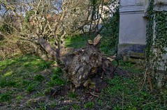 Irisvej 15 (væltet træ ved nordvestlige hjørne) - DSC_4962_3_4_Balancer
