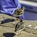 Harbourside Bird