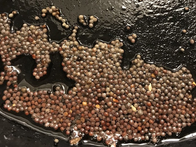 Popping Mustard Seeds