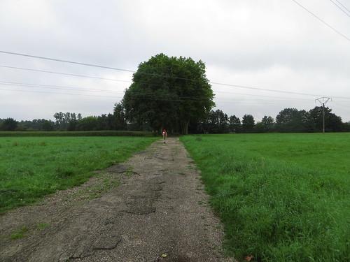 20140805 03 024 Jakobus Weg Allee Bäume Baum