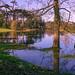 Trees in floods