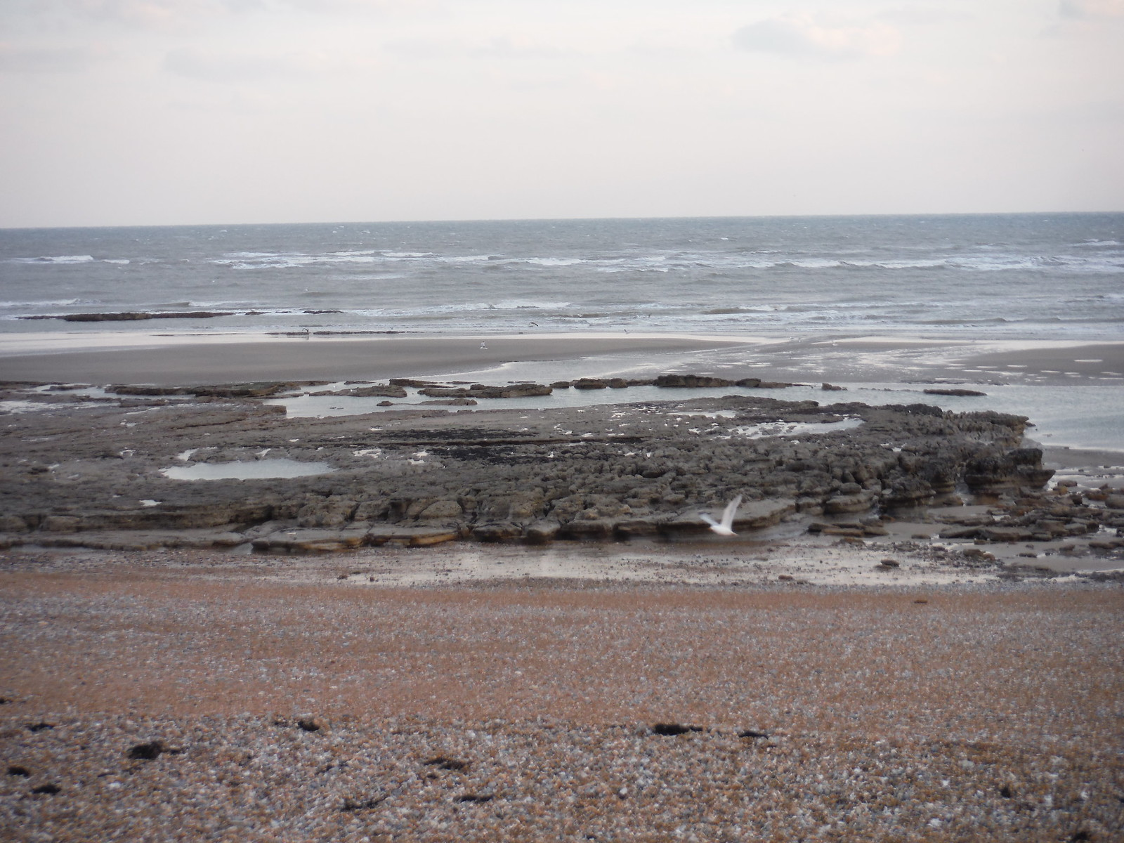 Rocks on the beach at low tide SWC Walk 66 - Eastbourne to Hastings via Bexhill