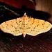 Crambidae: Conogethes punctiferalis (Durian Fruit Borer, Yellow Peach Moth)