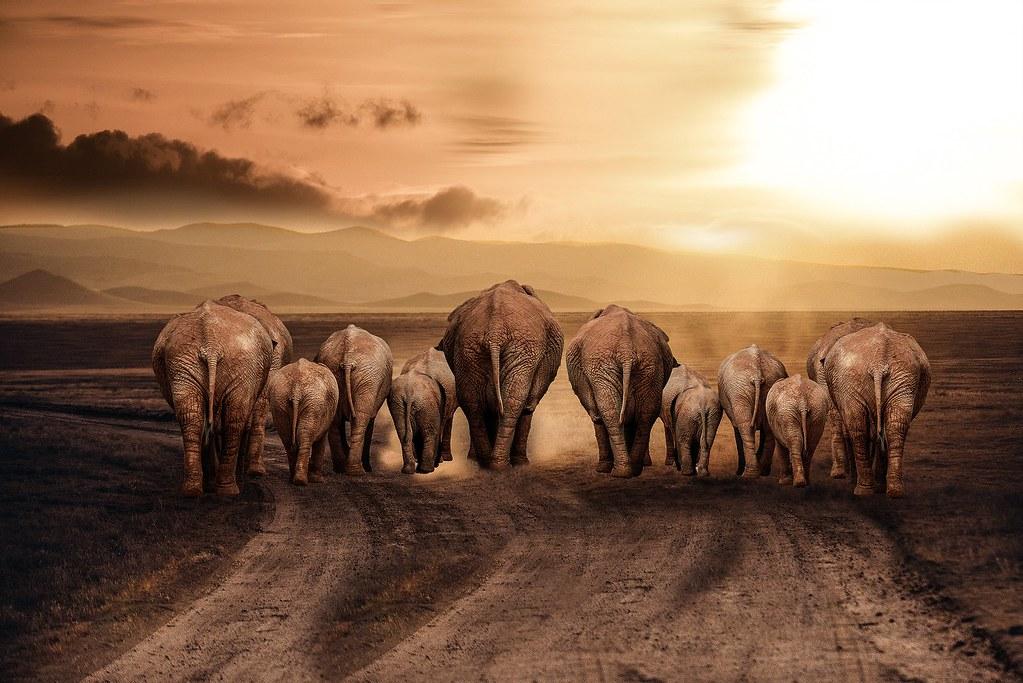 elephant-2066383_1920