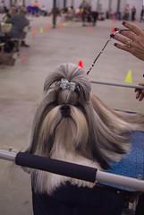 2018.02.17_IABCA Dog Show (Conyers, GA)