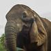 African Elephant - Elefante Africano flickr  #texture #textura #elefante #elephant #eyes #ojos #mirada