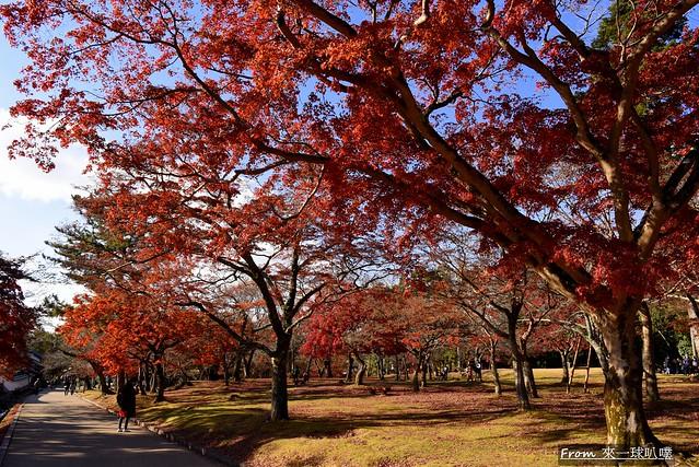 奈良公園47