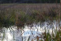Les prairies humides