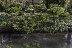 L'arboretum des Ilex