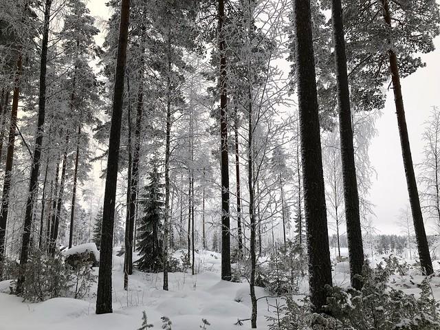 Ähtäri zoo, Finland 2018 27