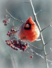 Cardinal Fastfood