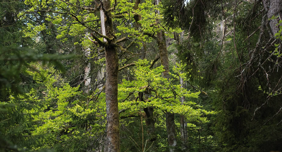 Wandelen in het Zwarte Woud: nationalpark Schwarzwald | Mooistestedentrips.nl