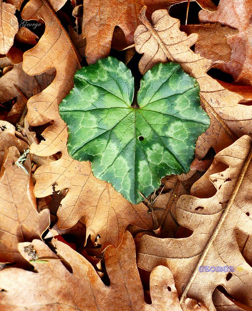 Love with fallen leaves