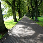 Tree lined pathway at Avenham Park
