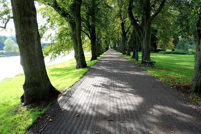 Tree lined pathway at Avenham Park