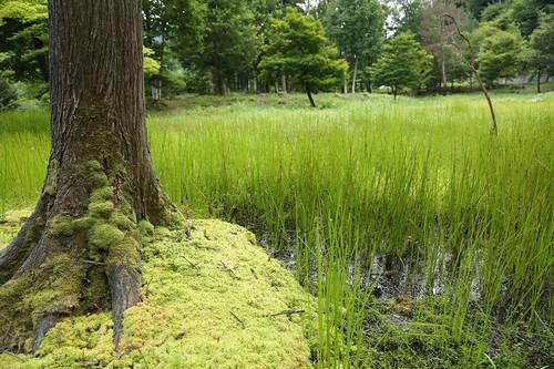 朽木池の沢庭園