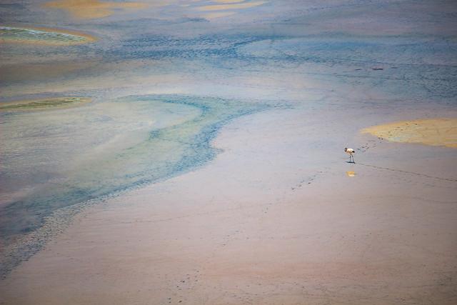 Footprints across salt flats
