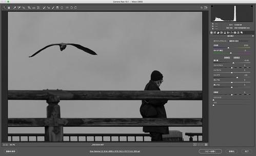 鳥撮りトリミング