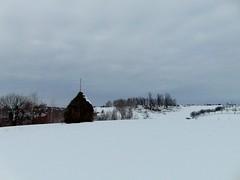 ianuarie blând/mild january
